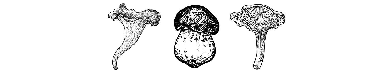 Suppilovahvero Hinta 2021